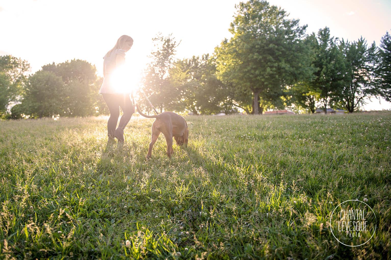 pitbull-sunset