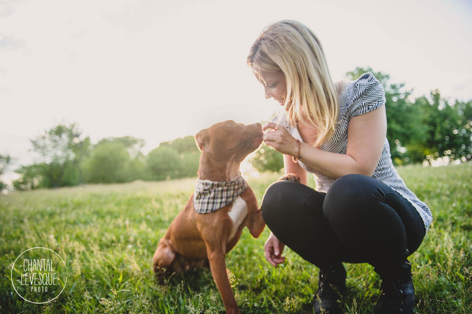 pitbull-treat