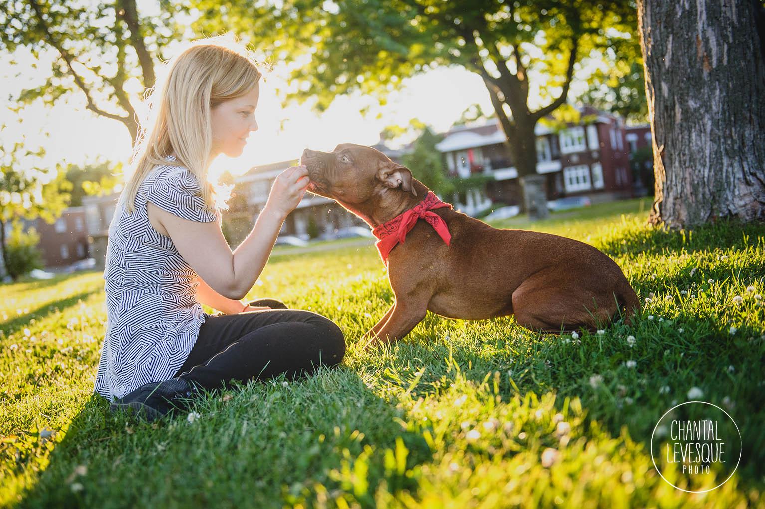 pitbull-sunset-treat
