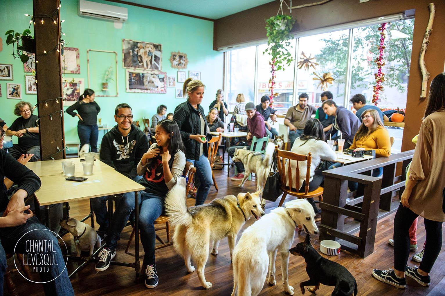 doggy-cafe