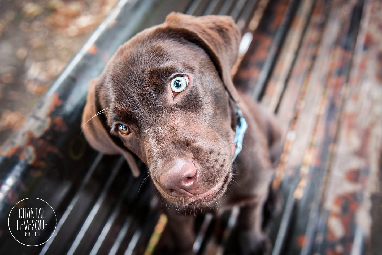 puppy-parc-bench