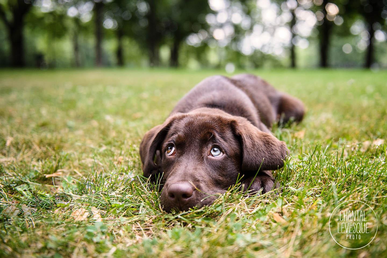puppy-rest