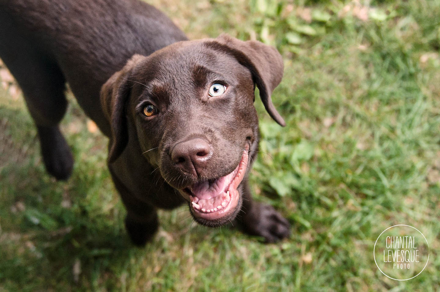 playfull-puppy-photography