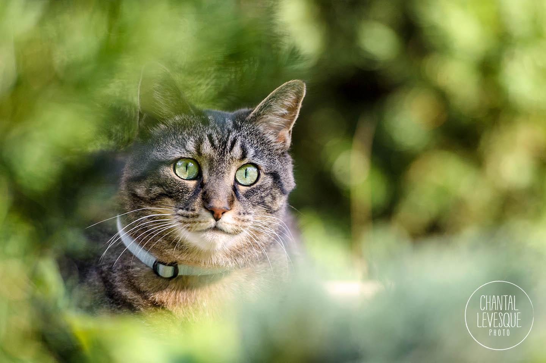 tabby-cat-green