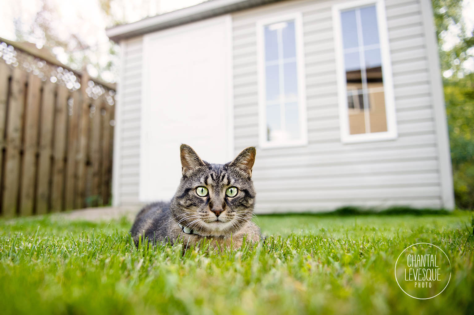 outdoor-cat-photography