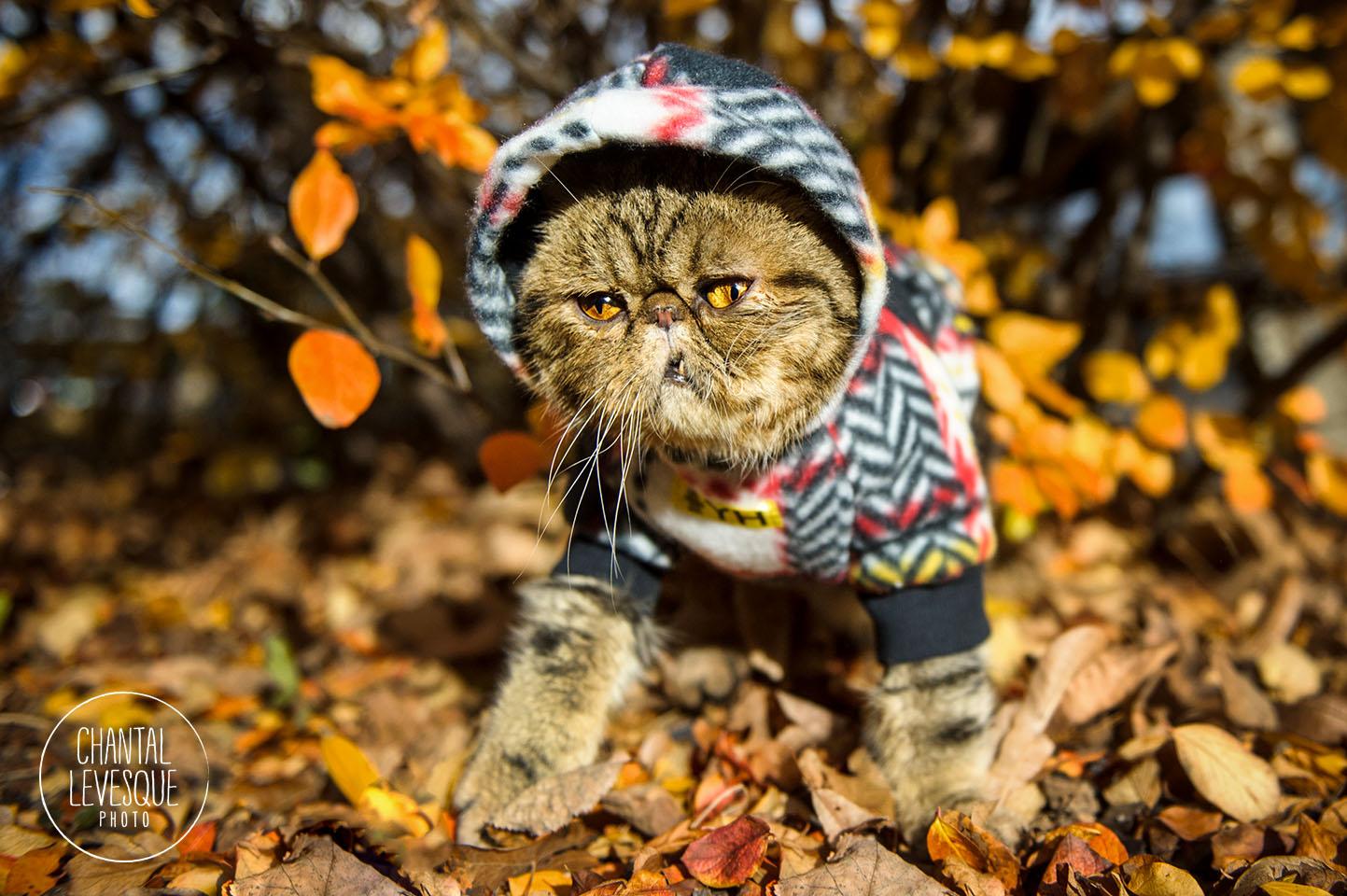 cat-fall-leaves