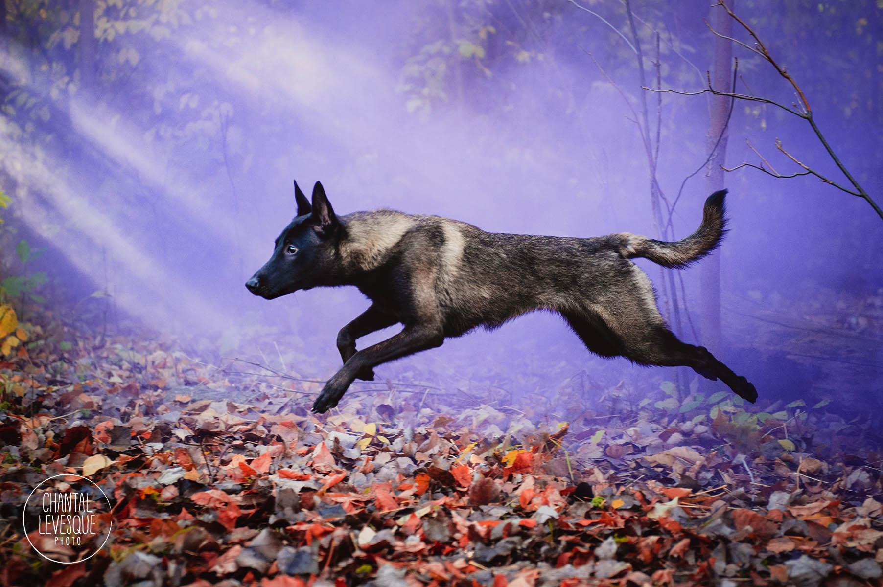 dog-running-color-bomb