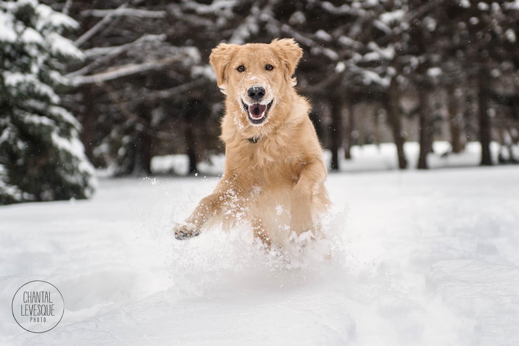 dog-run-snow