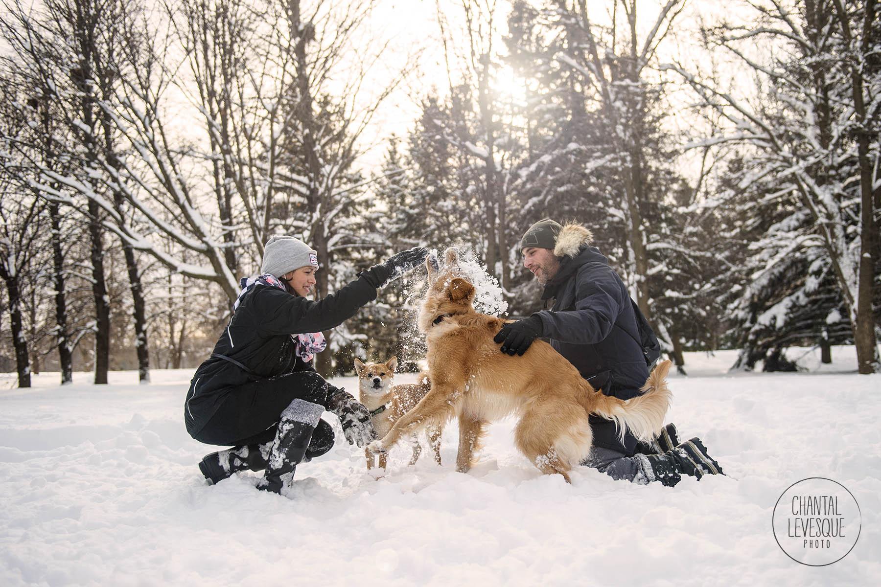 dogs-play-snow