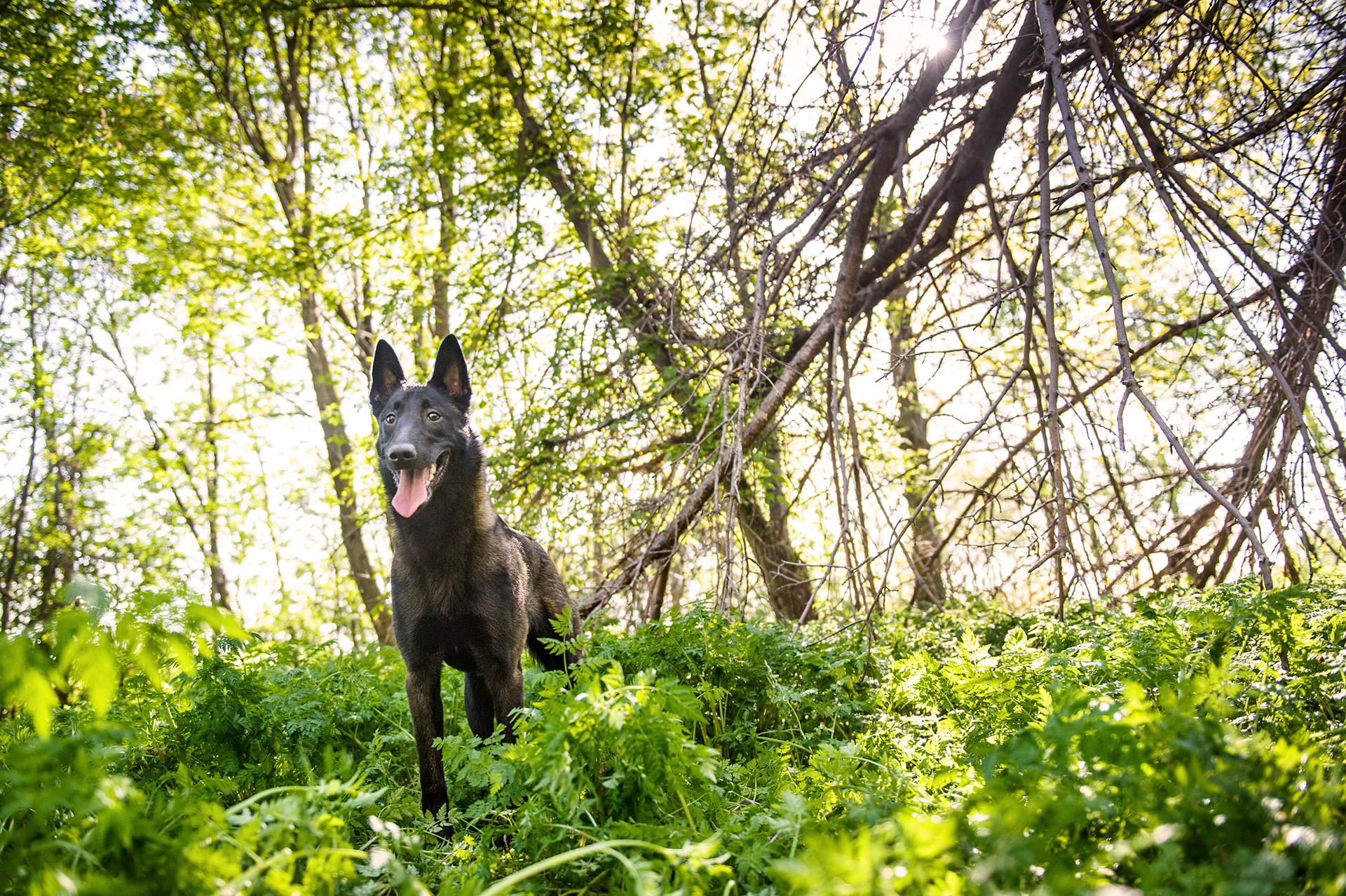 montreal-dog-photography