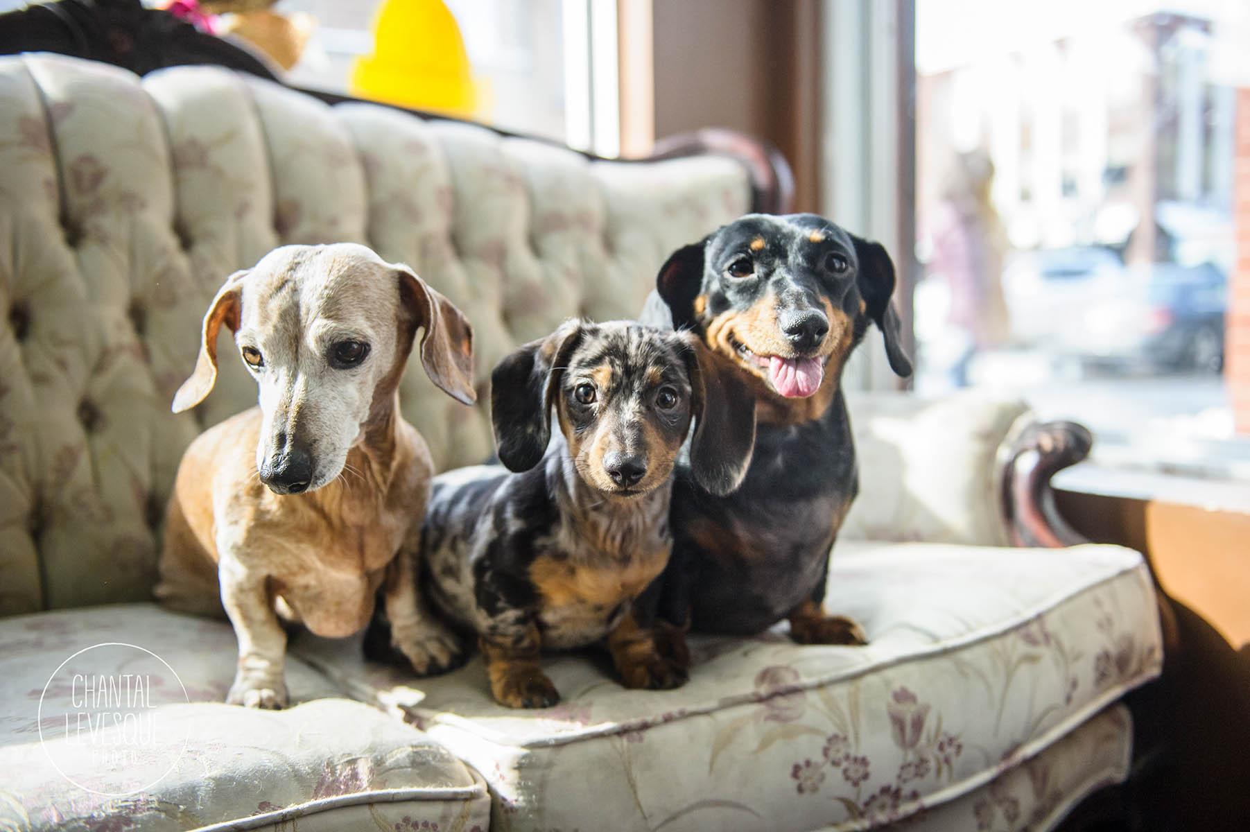 wienner-dogs-portrait