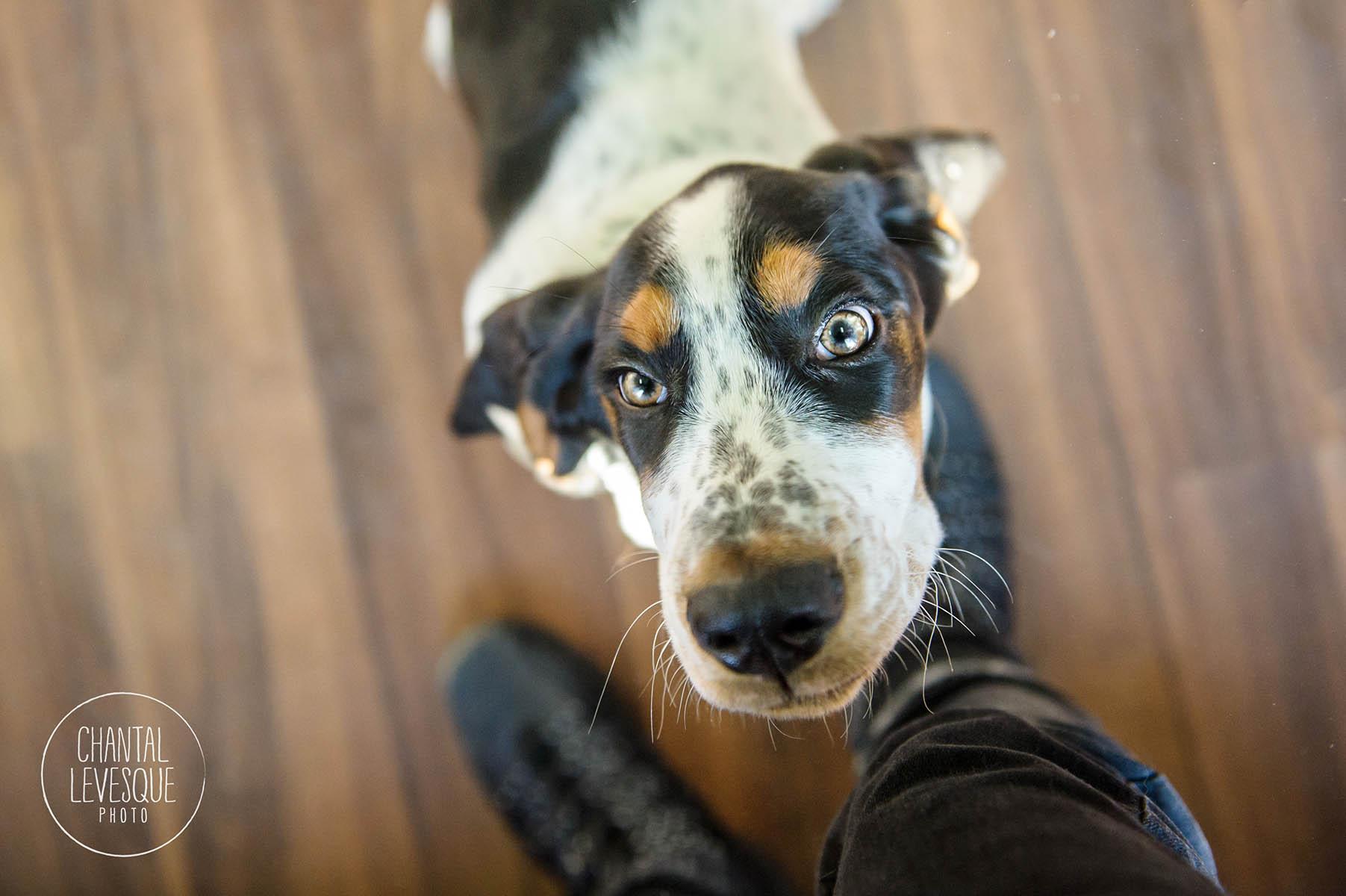 Doggy-Cafe-courtes-pattes-2453.jpg
