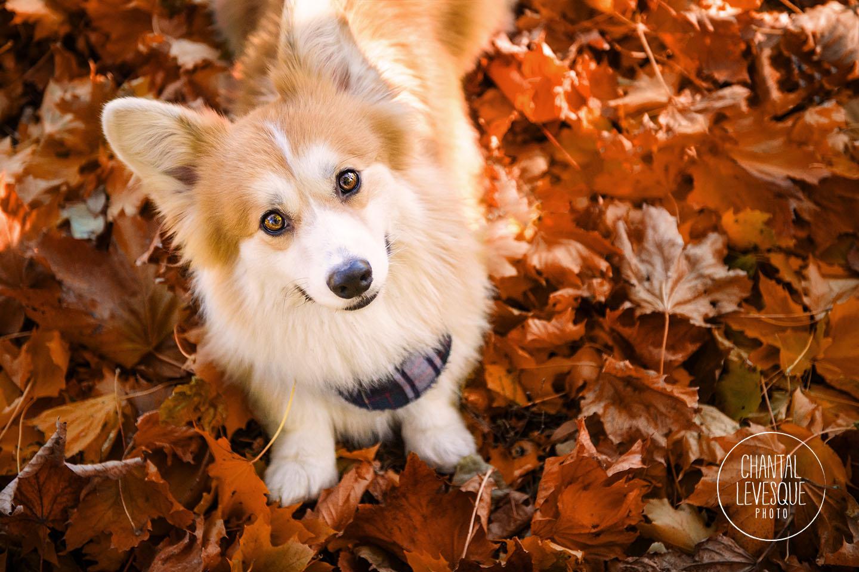 dog-photographer-montreal