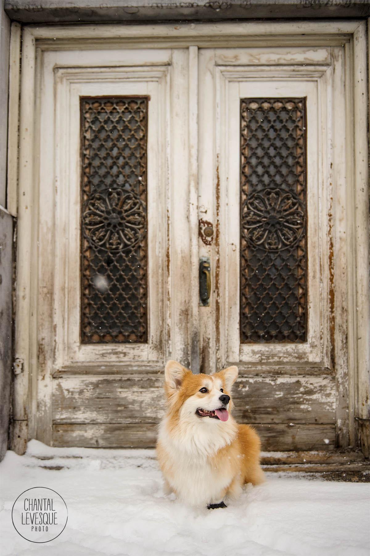 dog-photographer-doorway-montreal