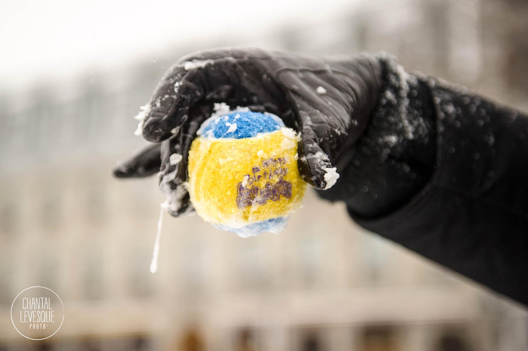 Capitaine ADORE jouer à la balle. Il est infatigable!! La balle devient trempée de bave! (même en hiver la bave gelée recouvre la balle… très chic! )