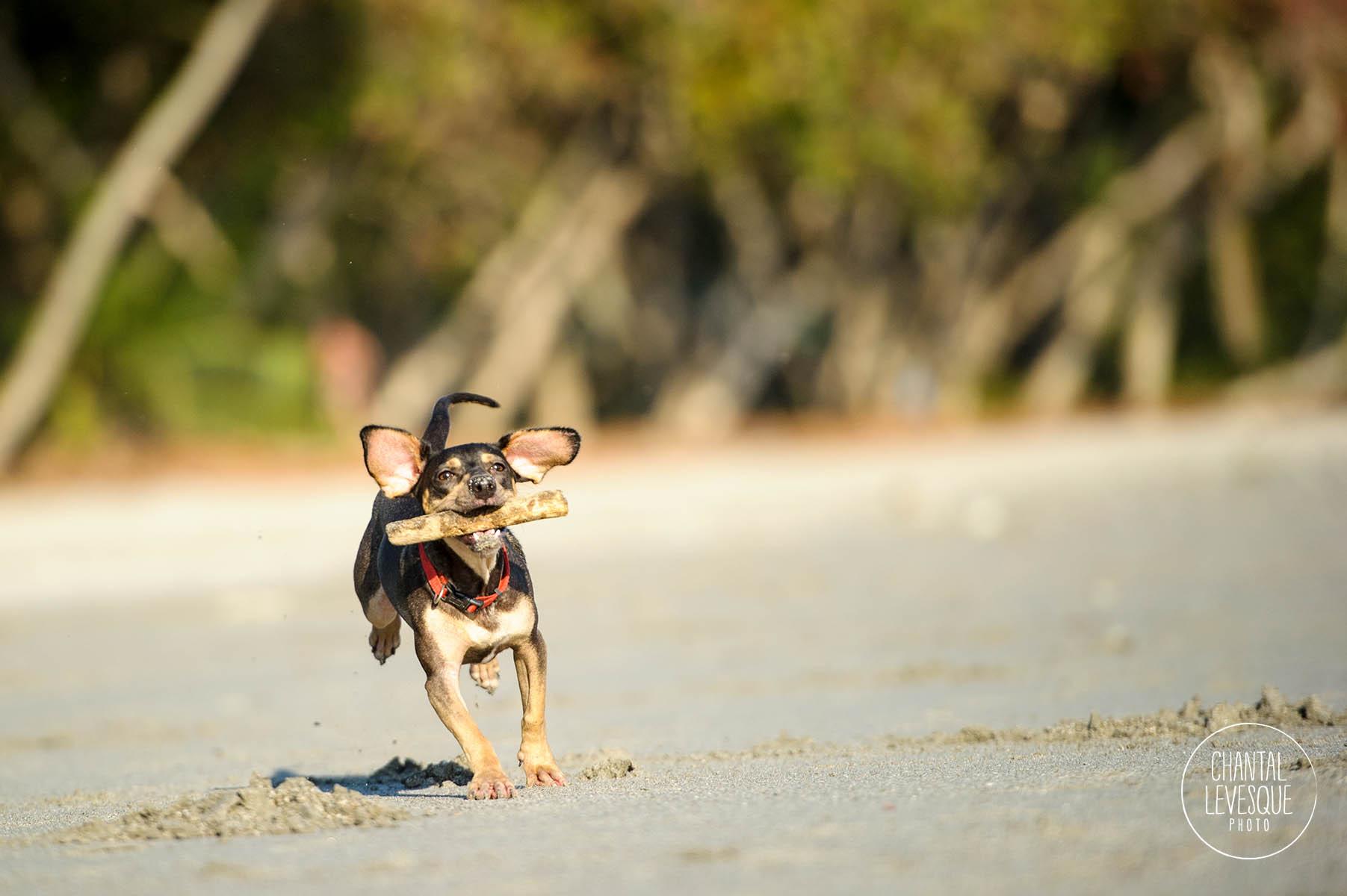 destination-pet-photography