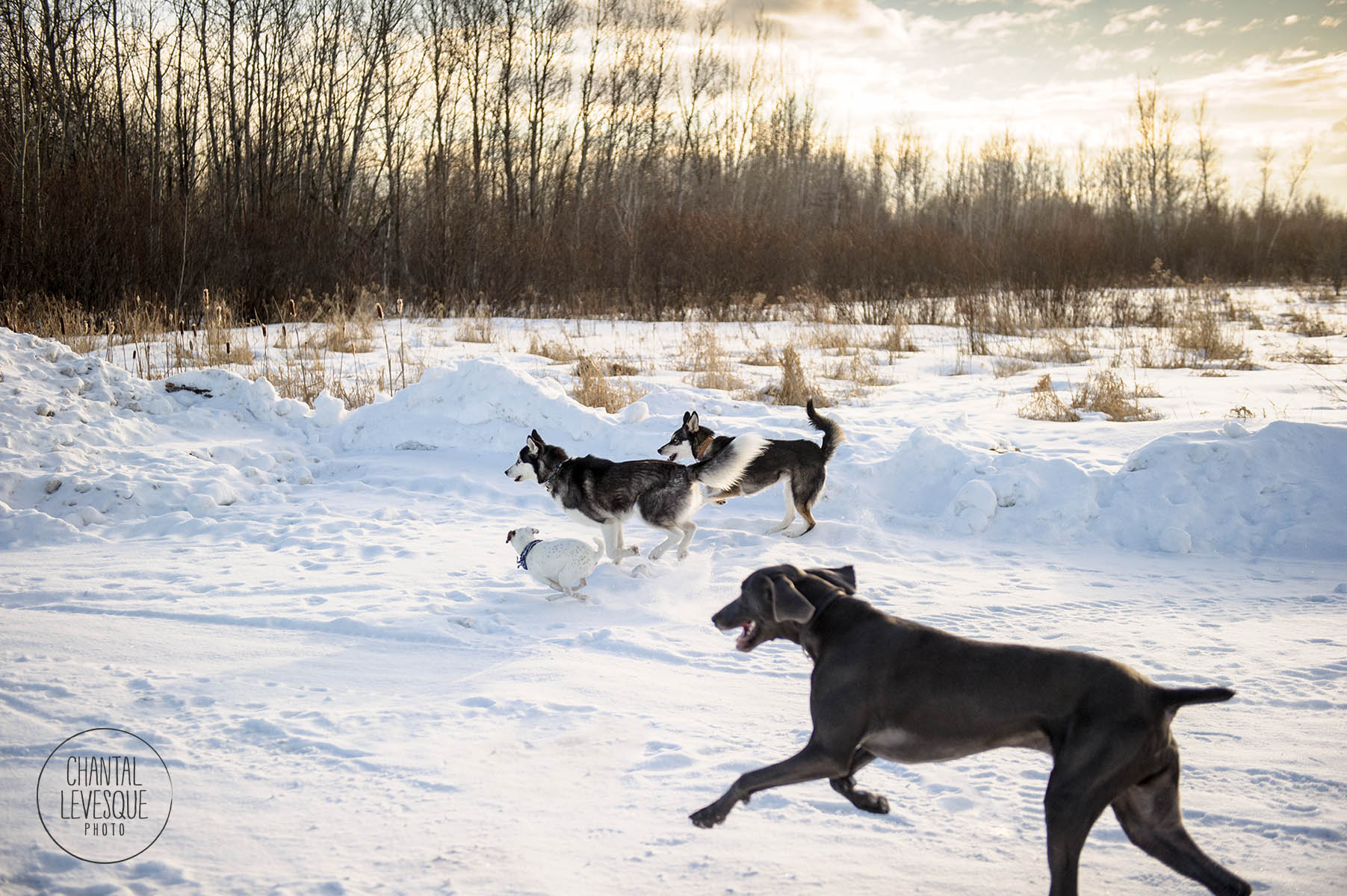 dogs-running-snow-photography