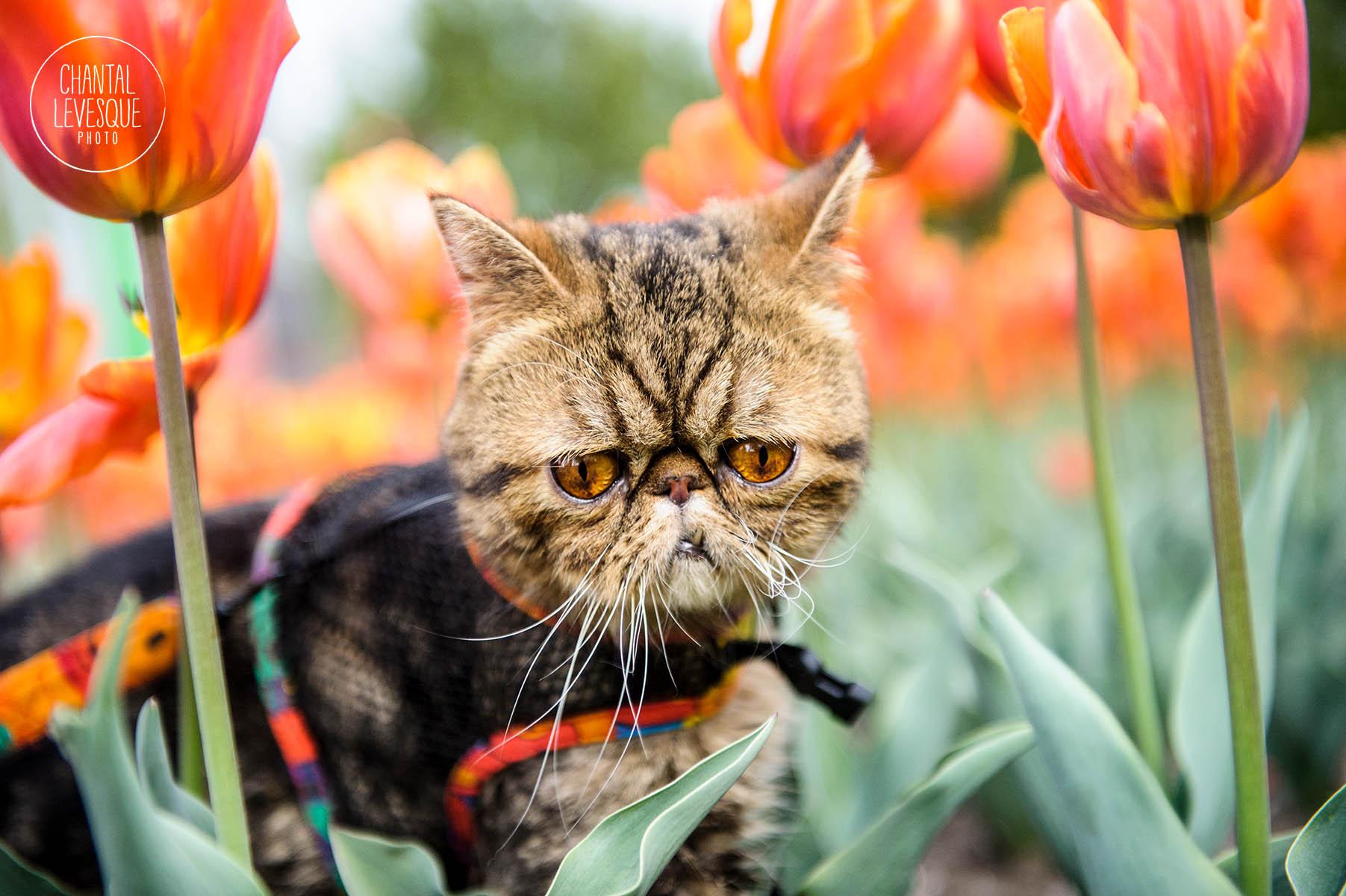 outdoor-kitten-portrait