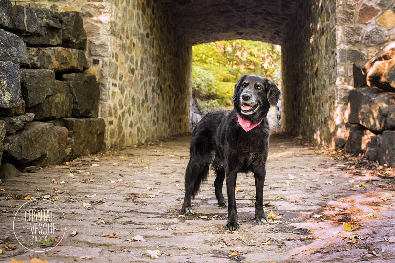 mont-royal-photographie-chien
