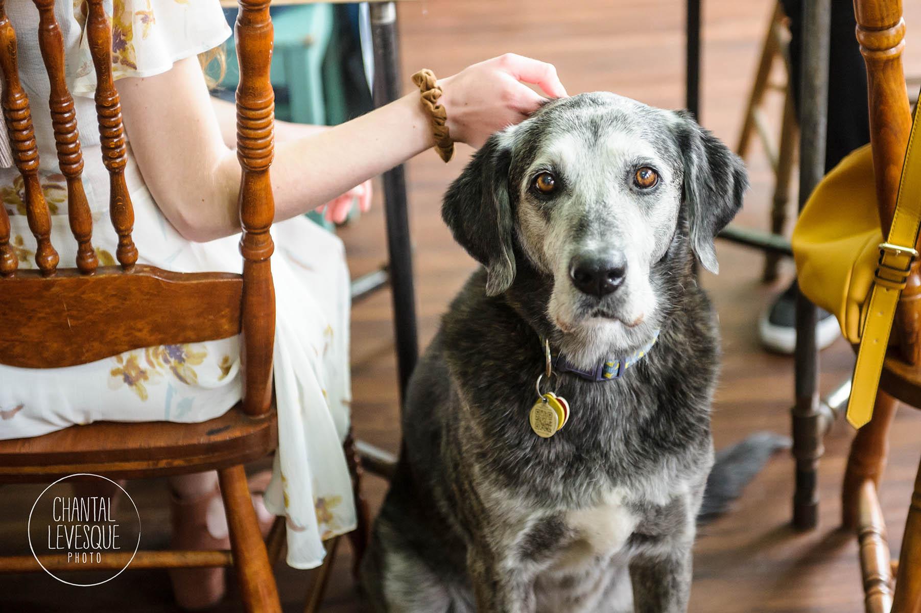 senior-dog-portrait-doggy-cafe