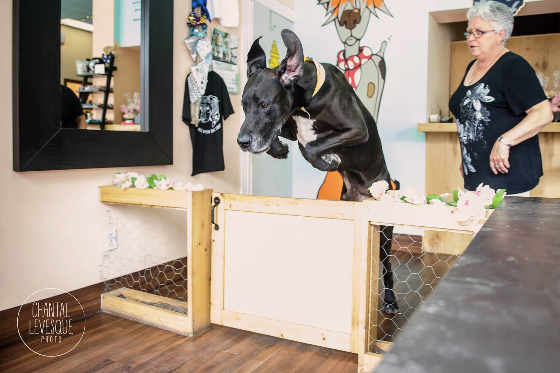 great-dane-doggy-cafe-montreal