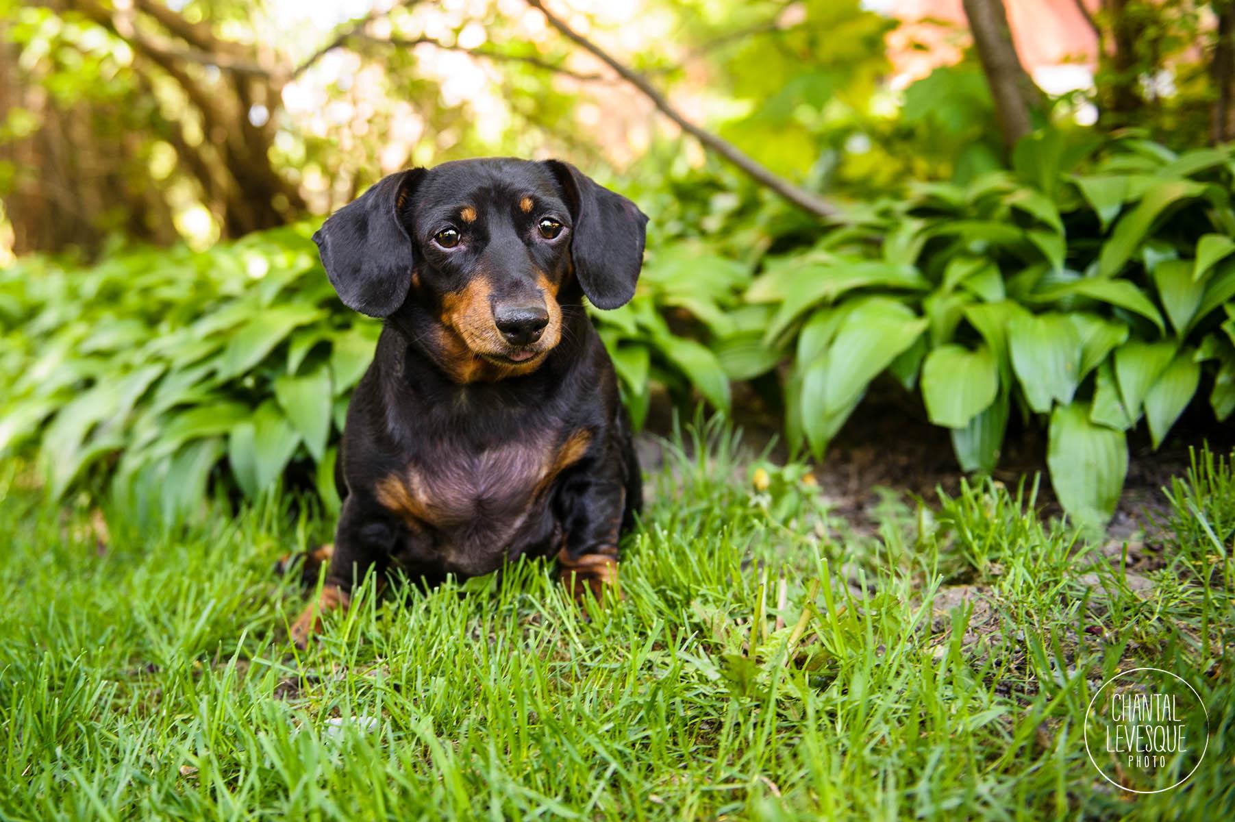 black-dog-photography
