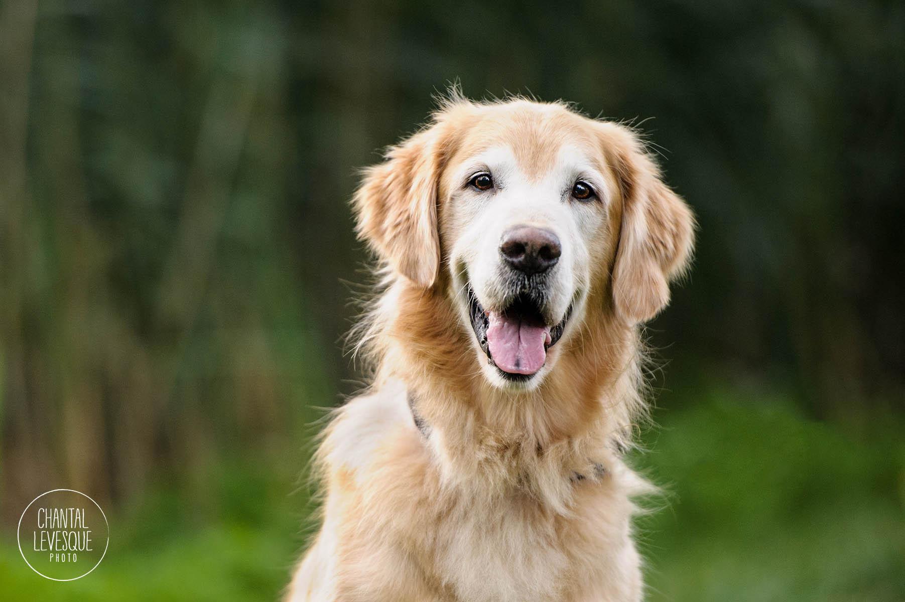 happy-dog-photo