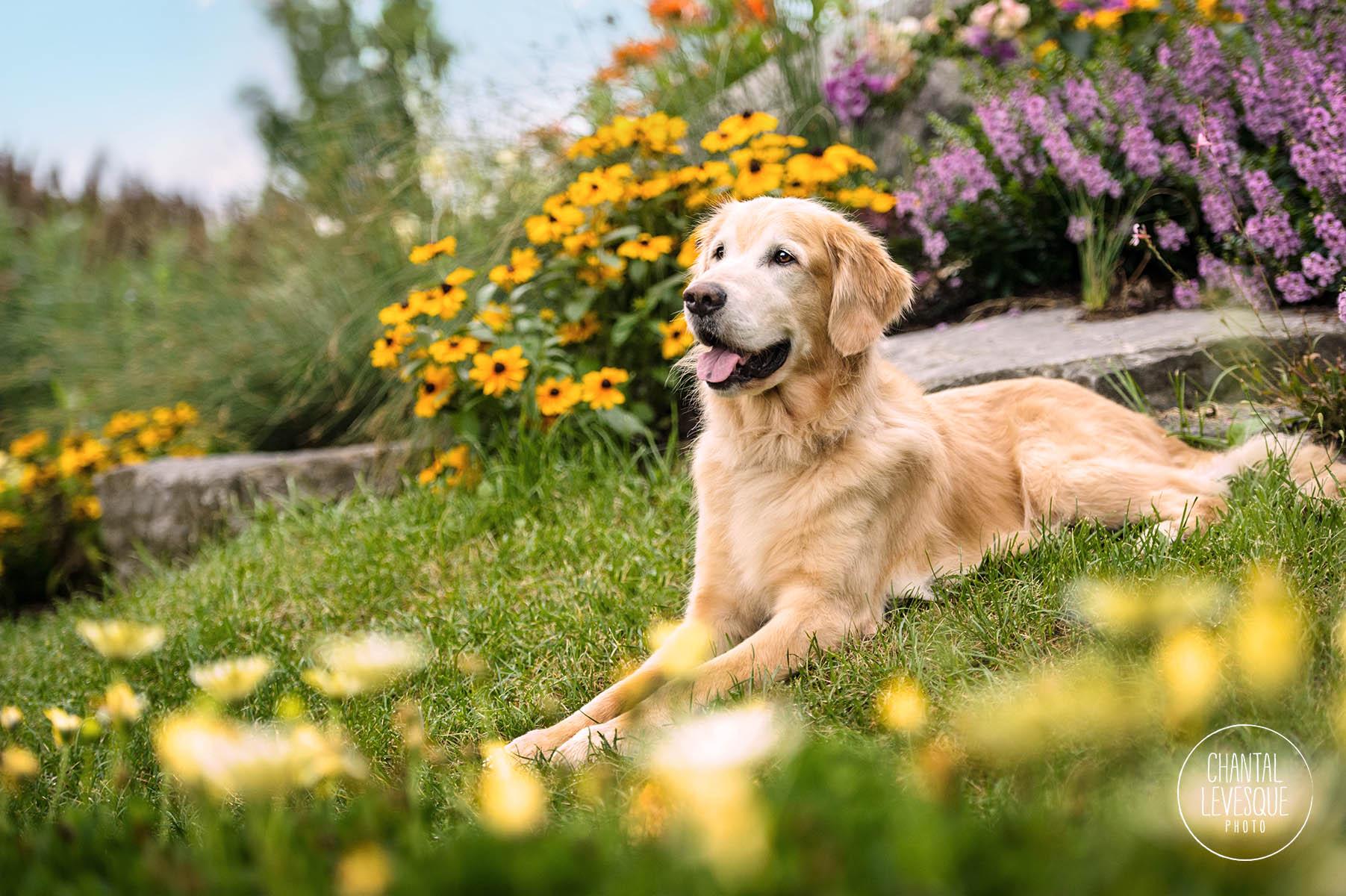 photo-chien-fleurs-montreal