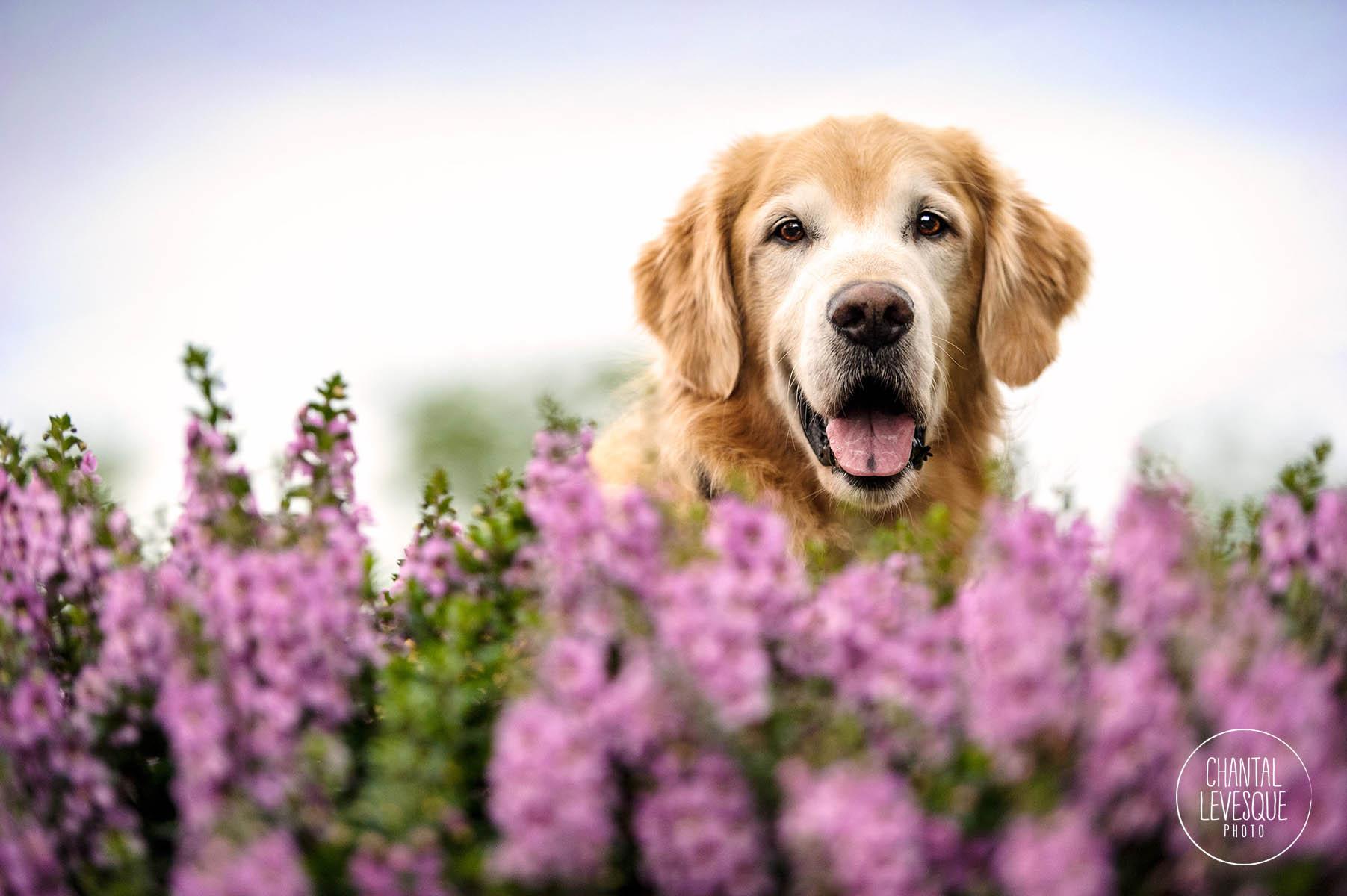 chien-sourire-photographie-montreal