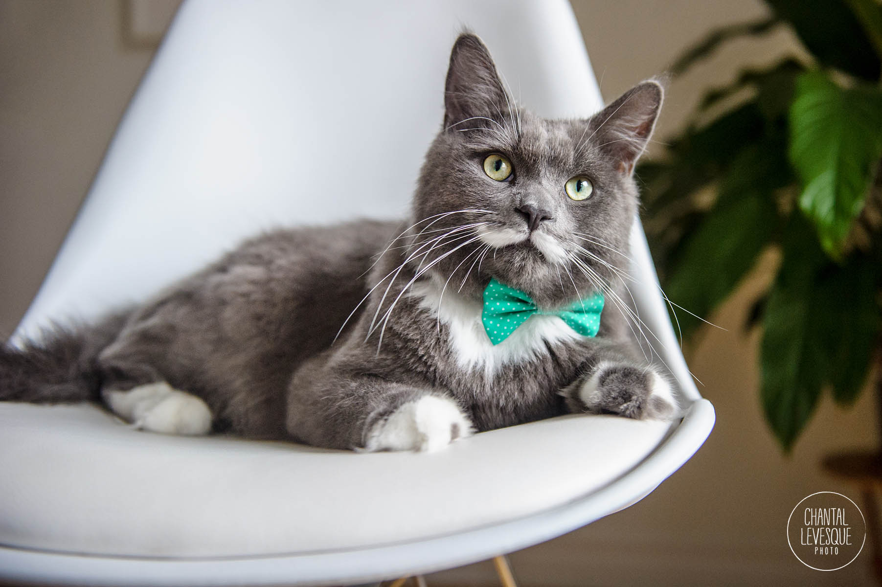 commercial-cat-photographer-quebec