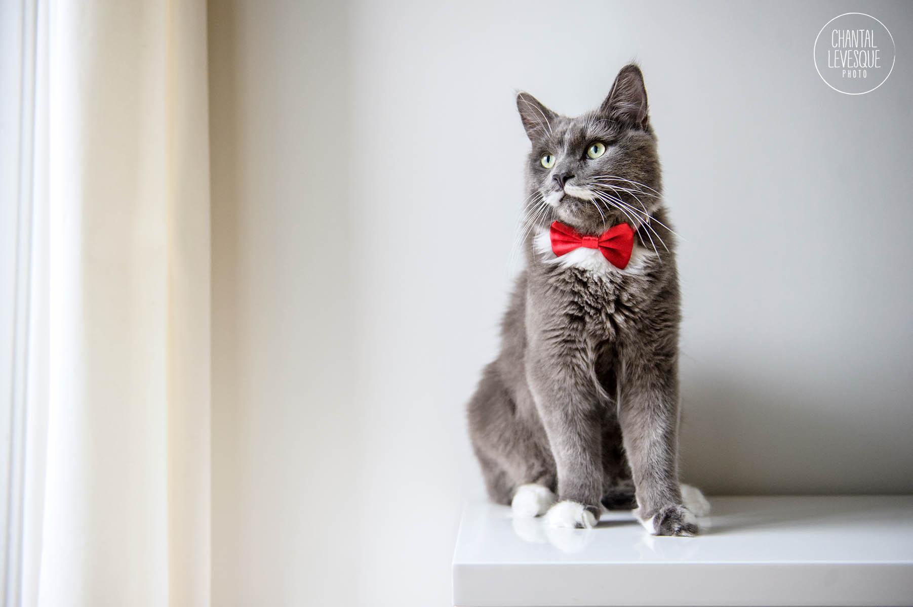professional-cat-photographer-canada