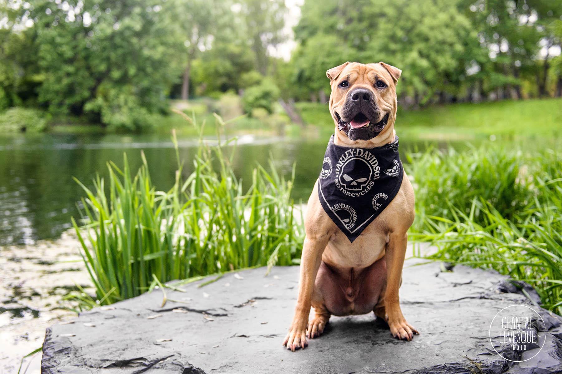 dog-photo-lake