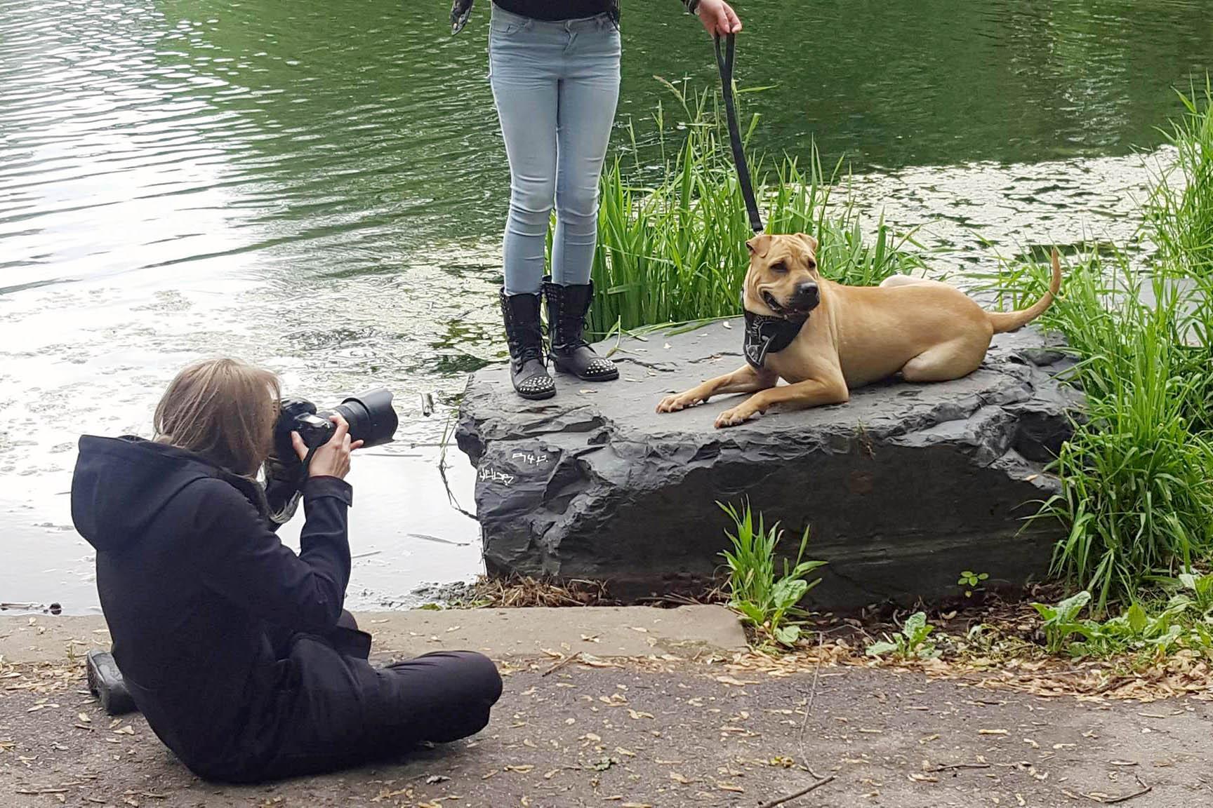 photographe-animaliere-montreal