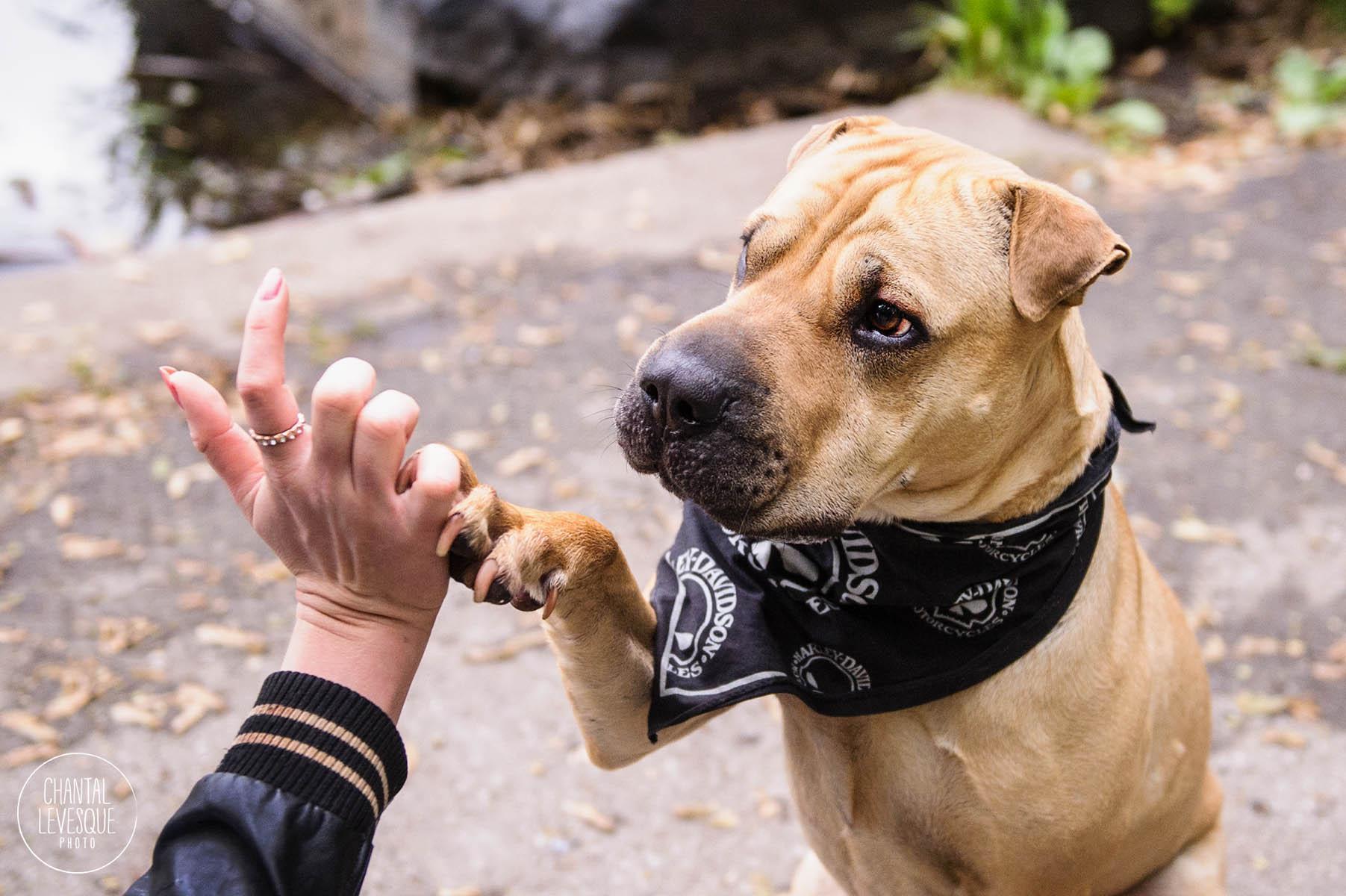 dog-high-five