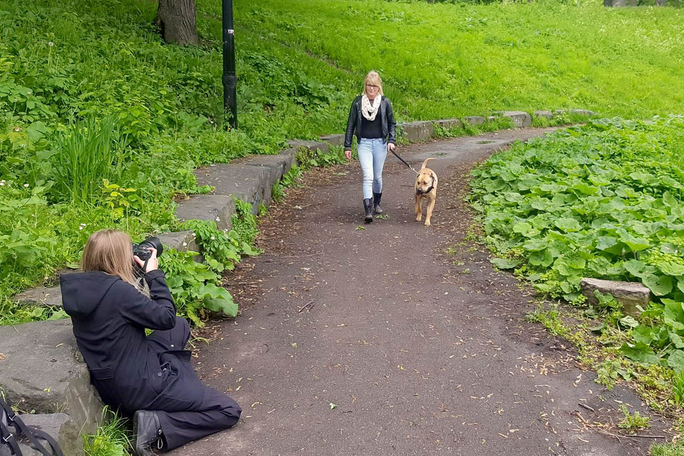 photographe-professionelle-chien-montreal