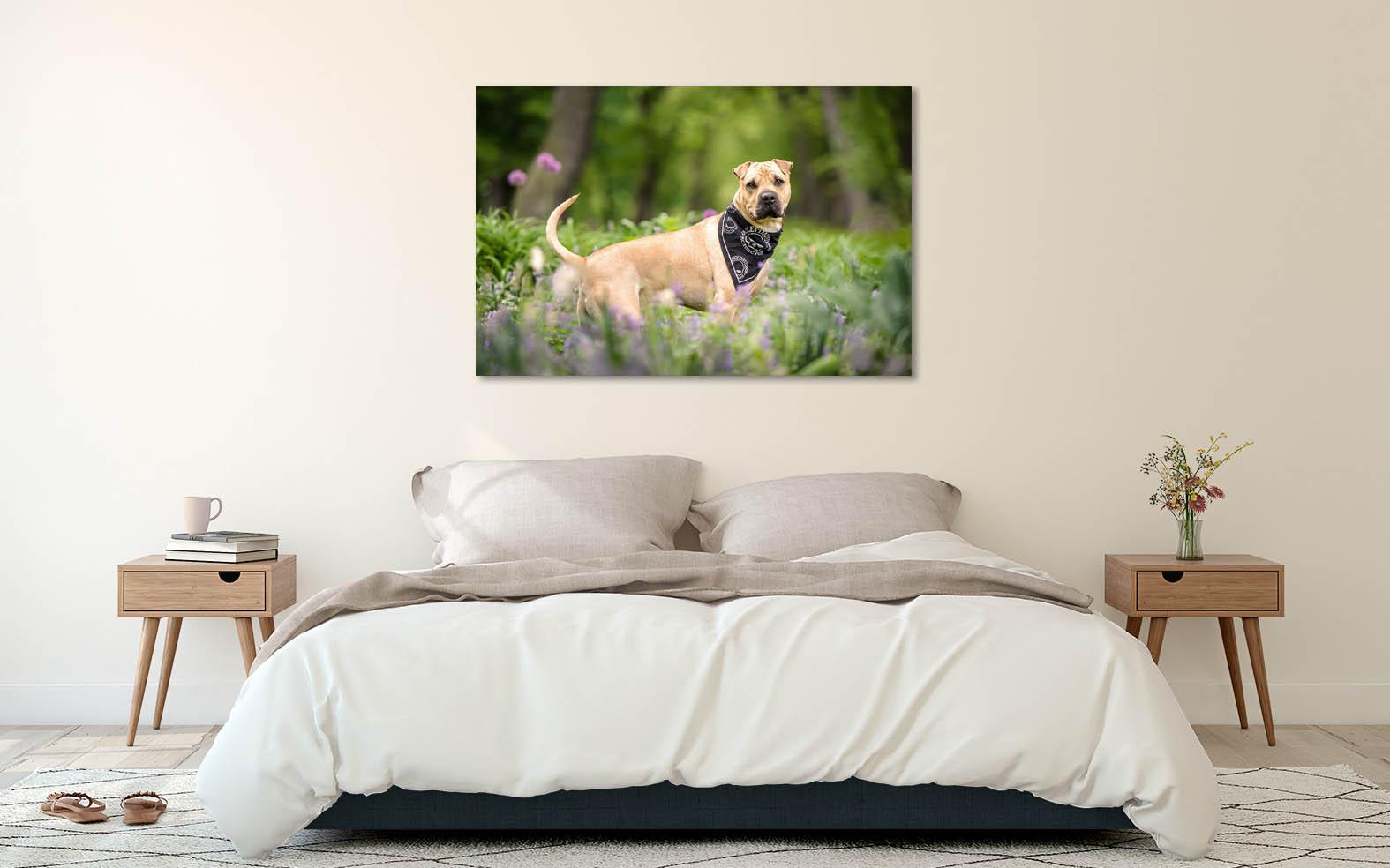 dog-portrait-wall-art
