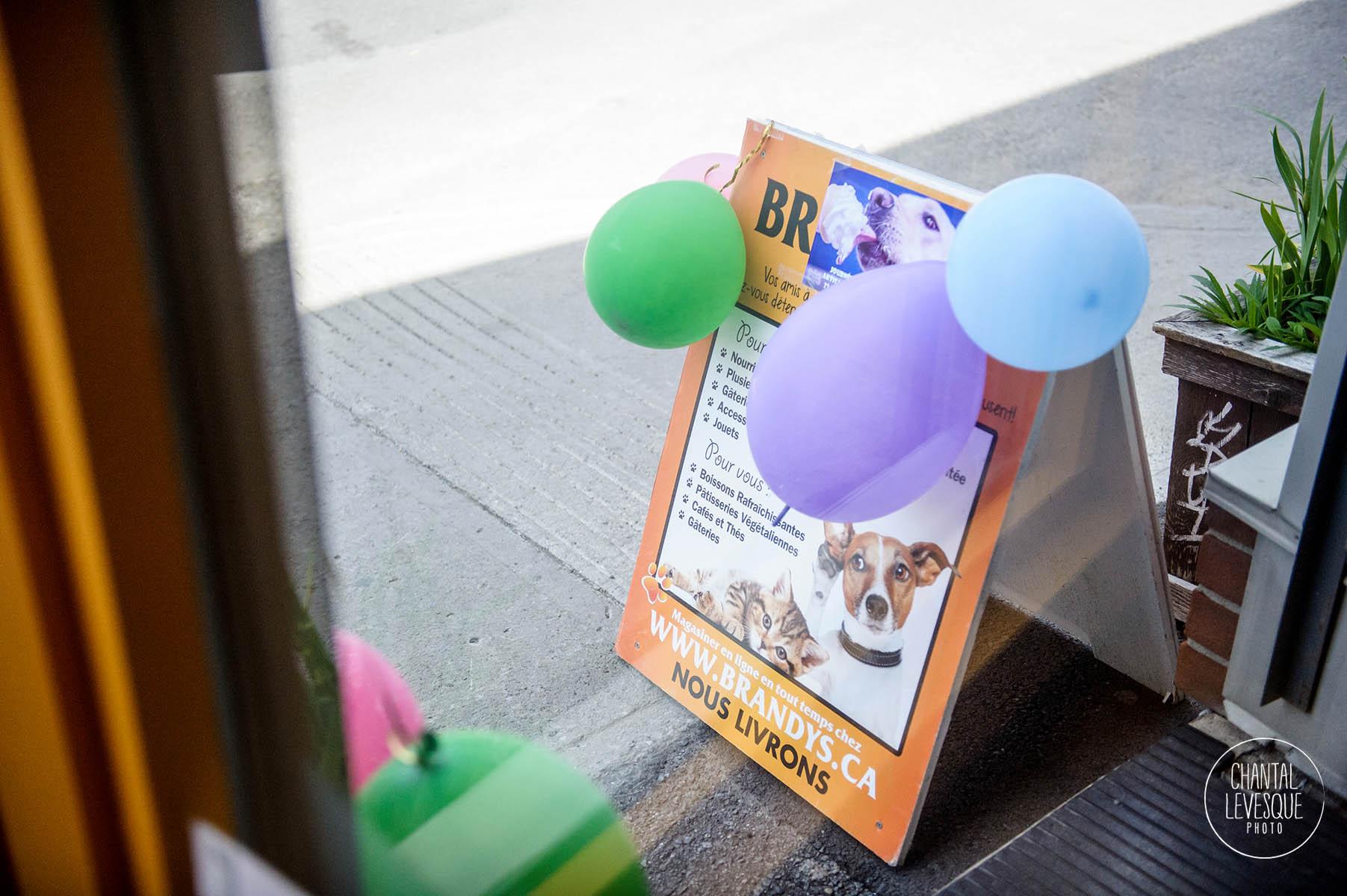 Brandys-DogHairINCluded-8507.jpg