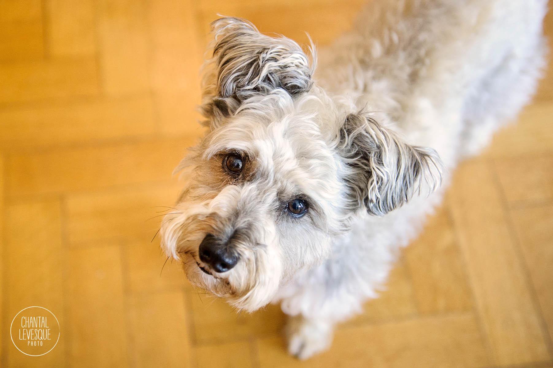 Brandys-DogHairINCluded-8739.jpg