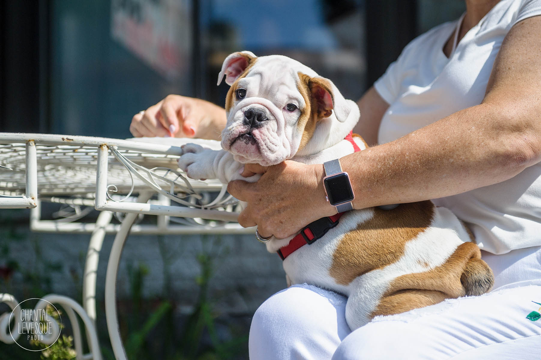 doggy-cafe-chiot-photographie