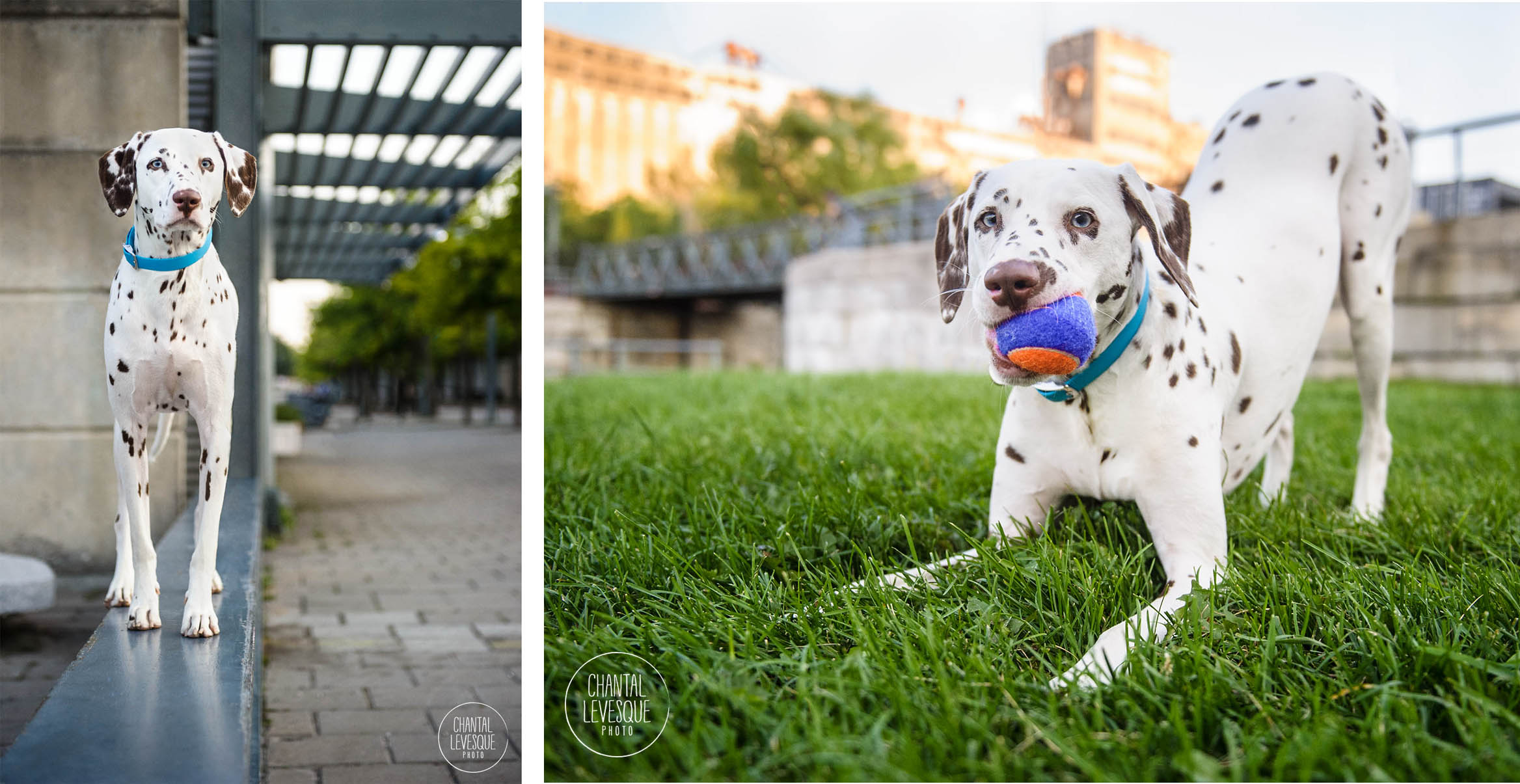 dalmatian-city-photography