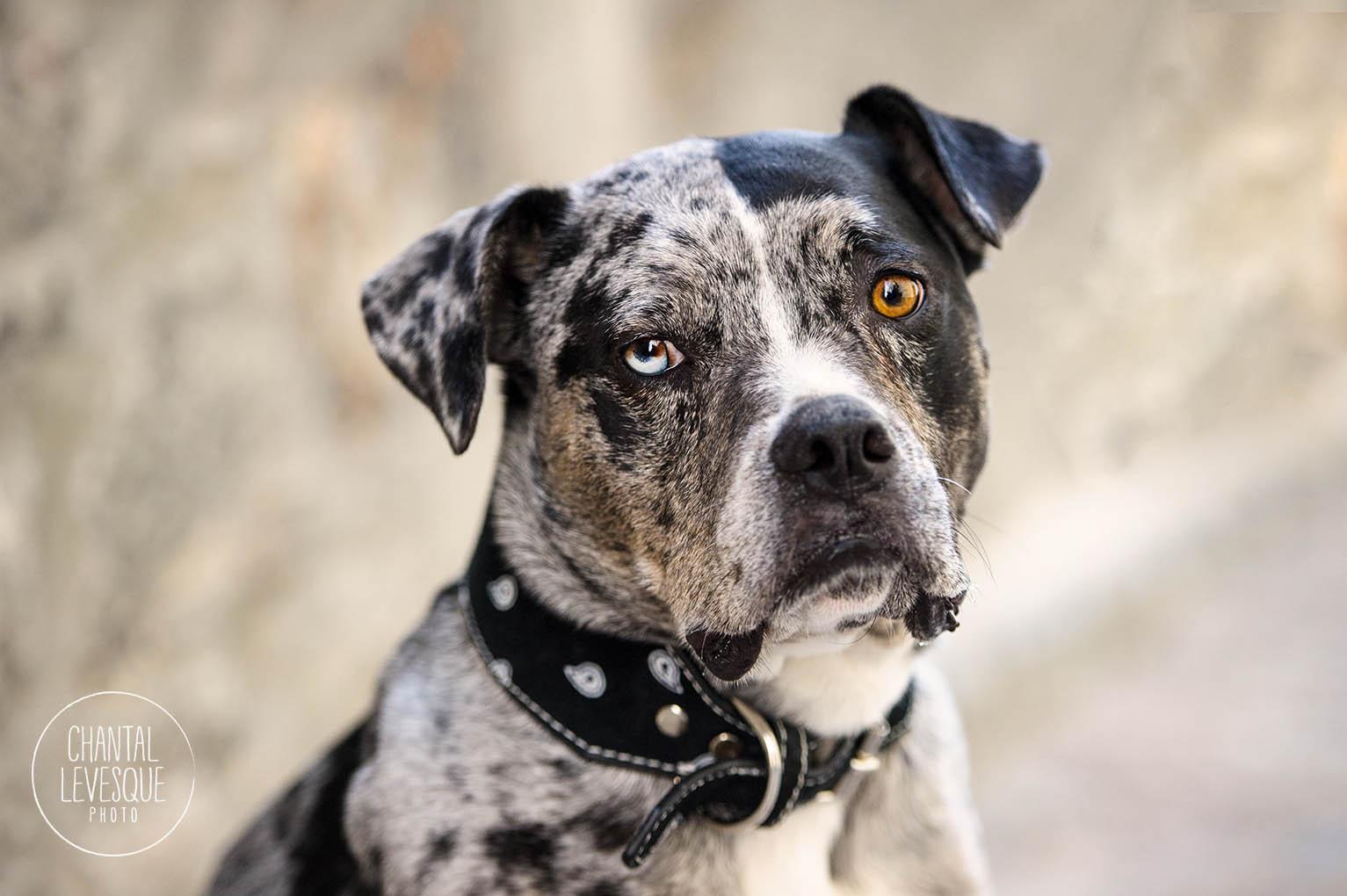 old-montreal-dog-portrait