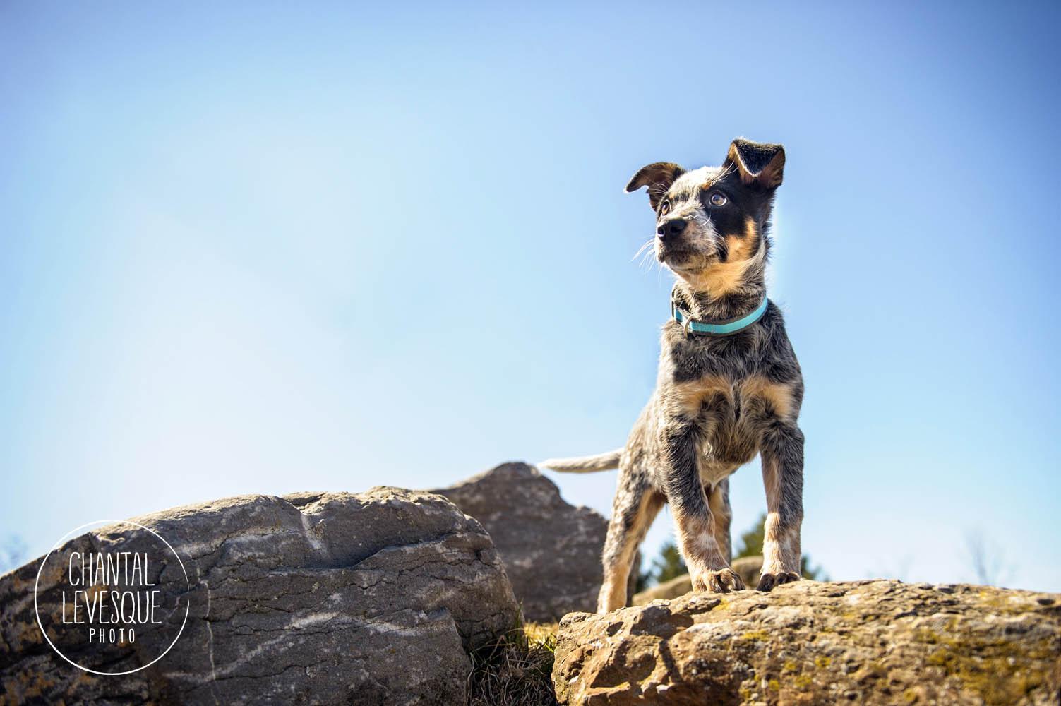 puppy-photo-jarry-park