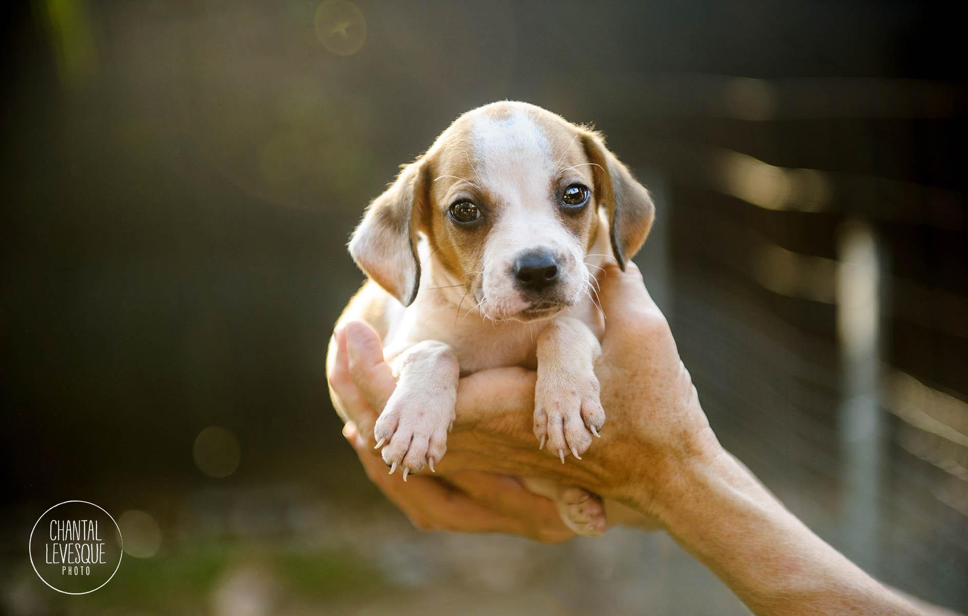 puppy-Levesque-5178-web.jpg