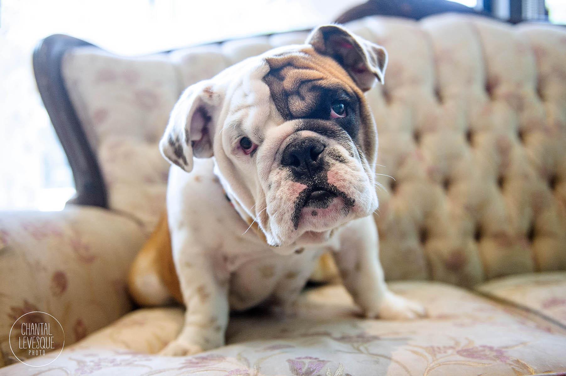 doggy-casting-bulldogs-5719.jpg