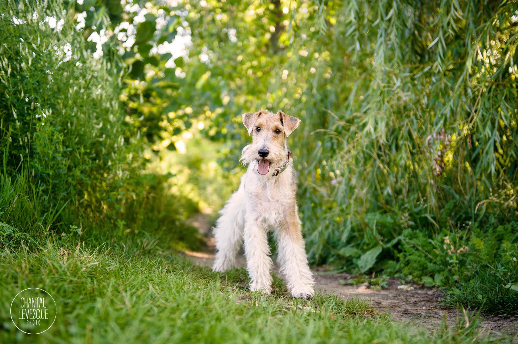 dog-photography-verdun.jpg