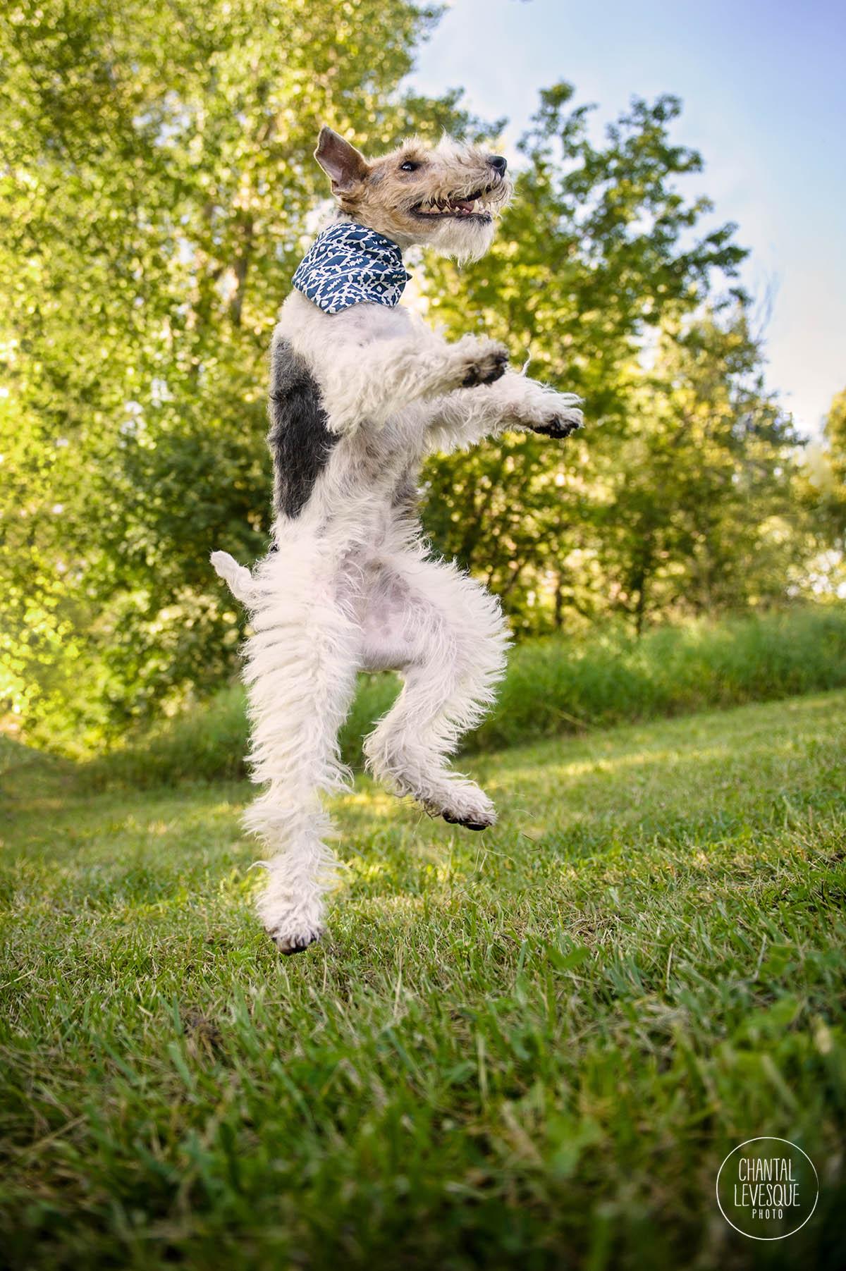 dog-jump-photo-montreal