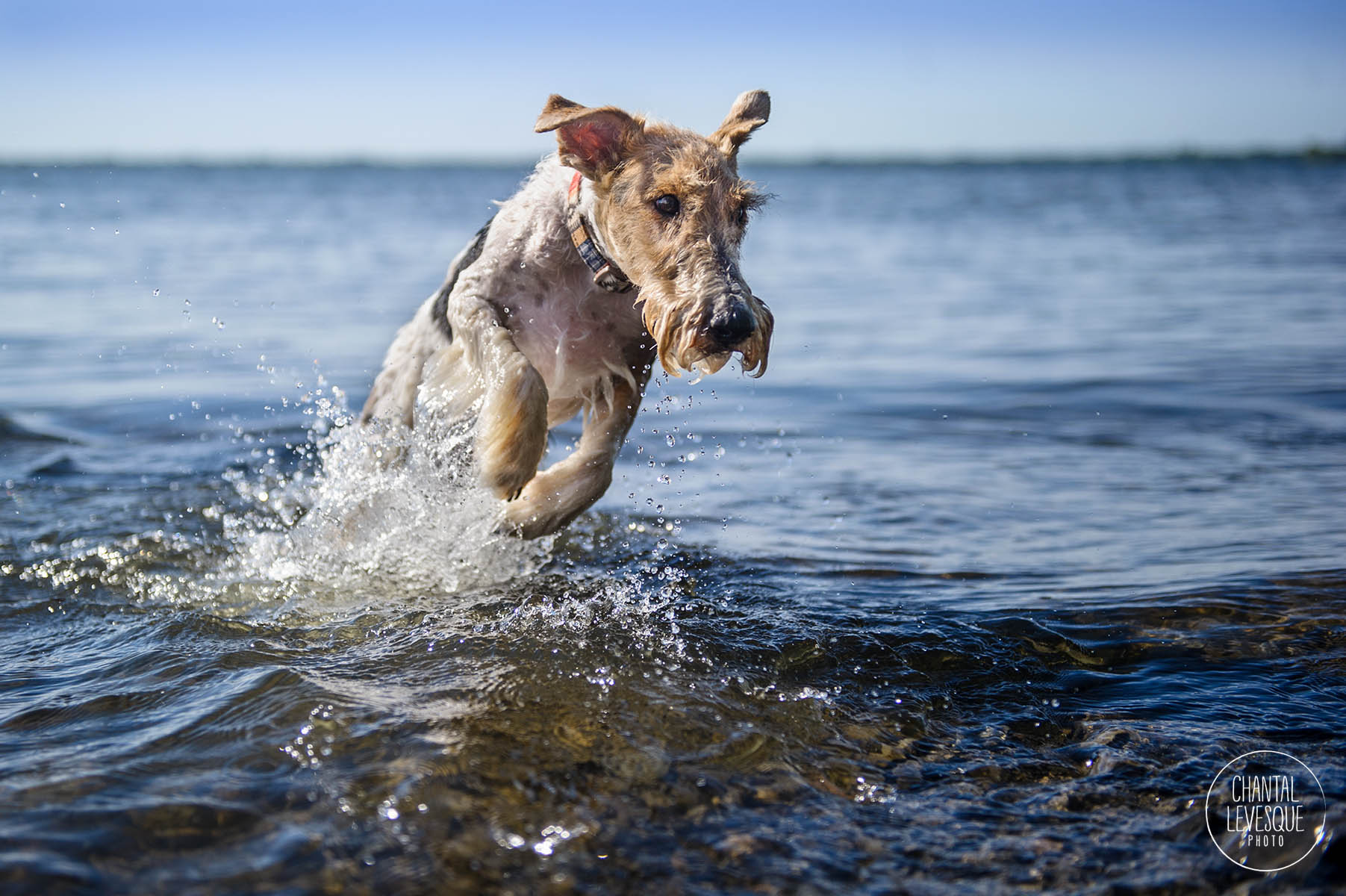dog-photography-jump-water-montreal