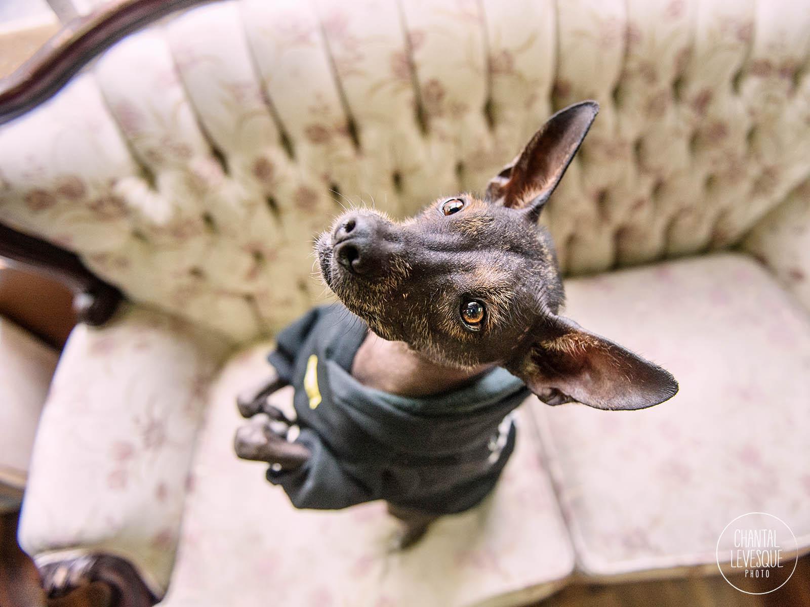 doggy-calendrier-Etrange-8776-web.jpg