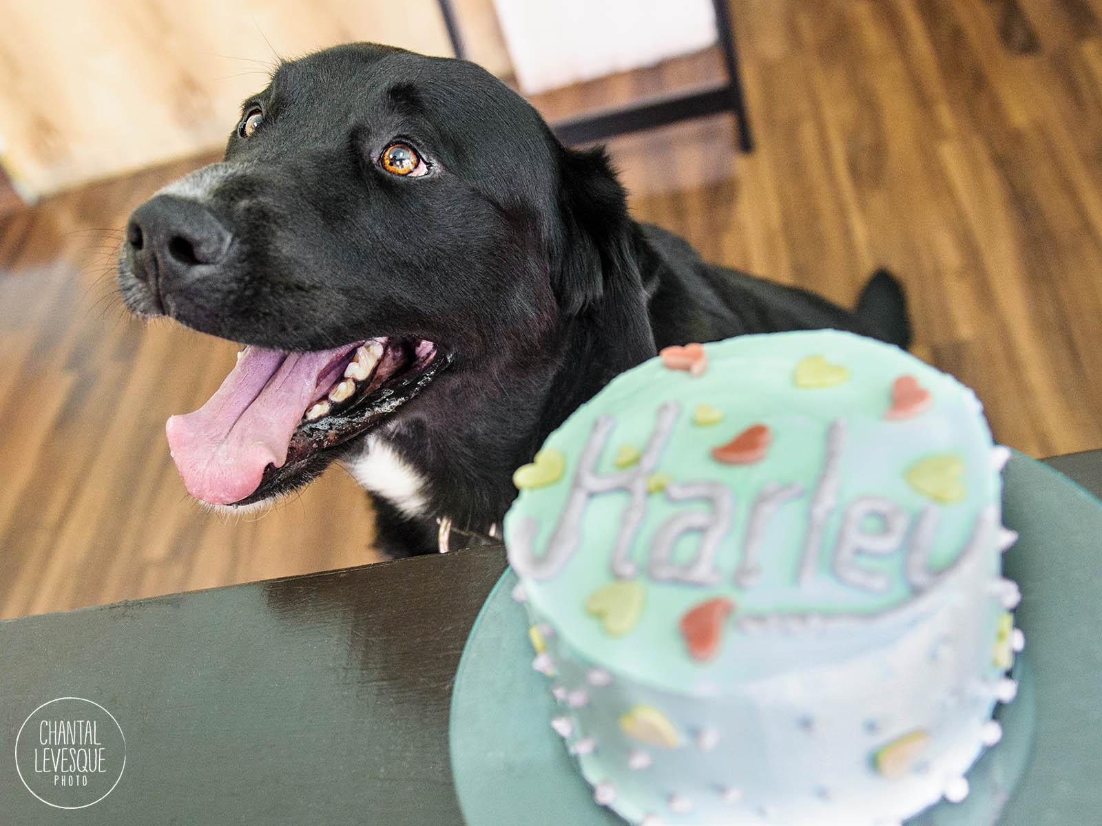 Doggy-calendrier-Harley-5602-web.jpg