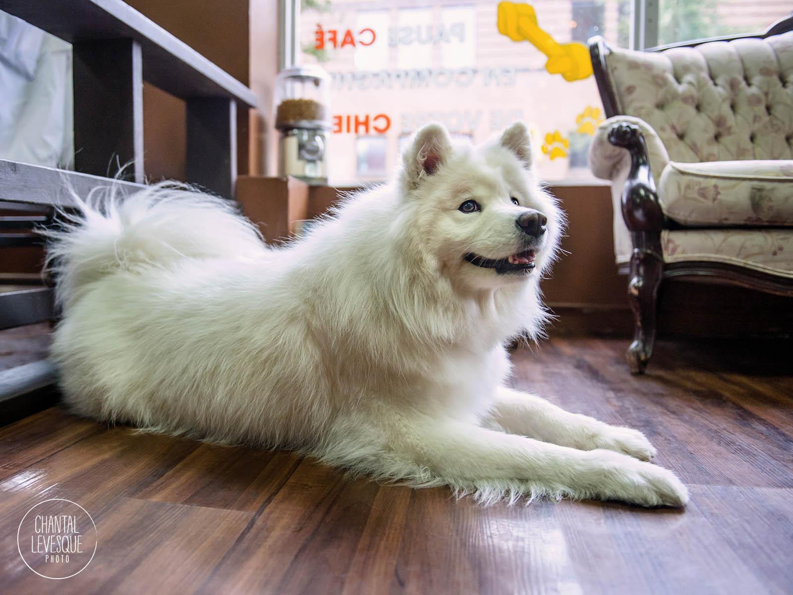 Doggy-calendrier-Maeby-8983-web.jpg